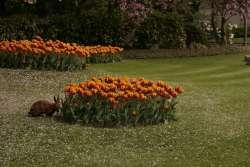 Antwerpen Zoo paaskonijn